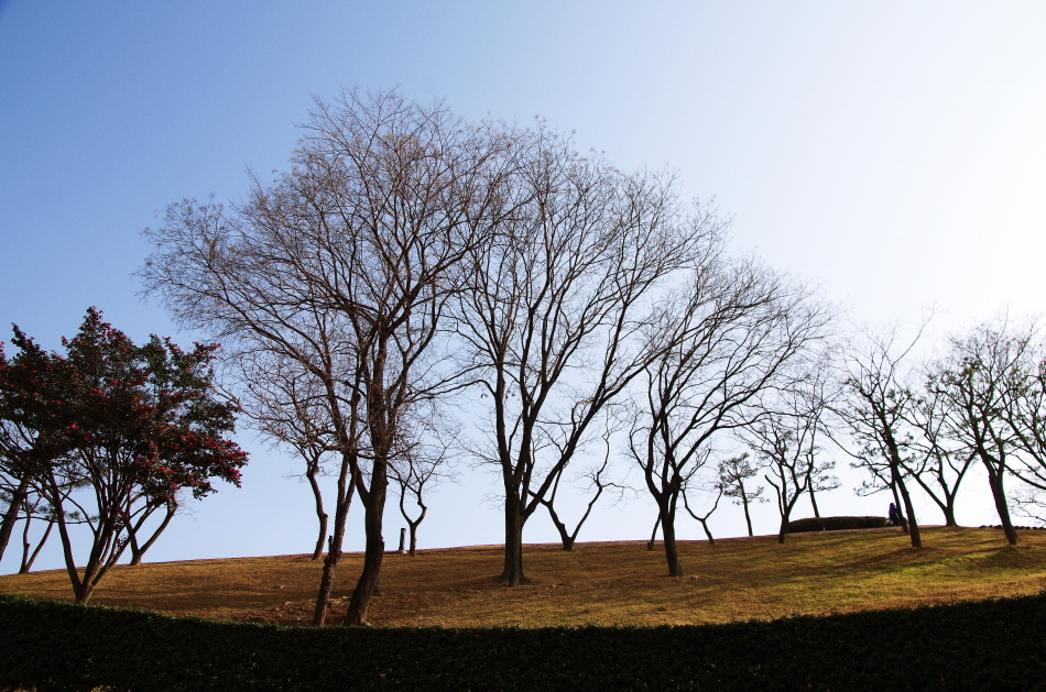 동래읍성뿌리길 나무
