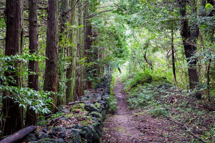 고살리 숲길