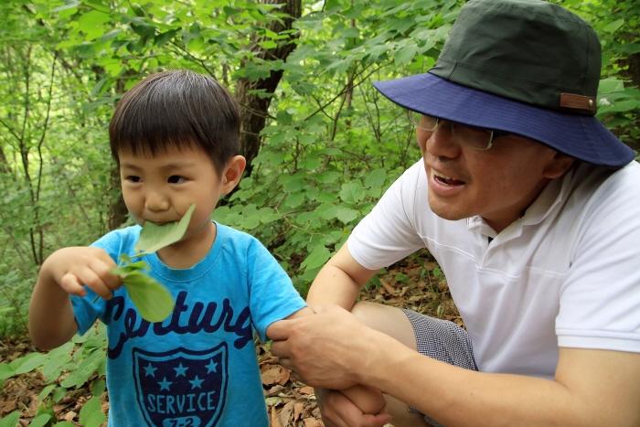 생강나무 잎사귀를 먹어보는 아이