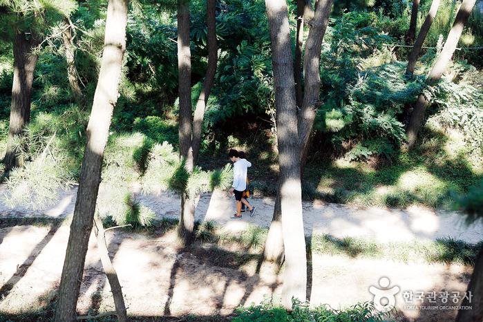 장항송림산림욕장