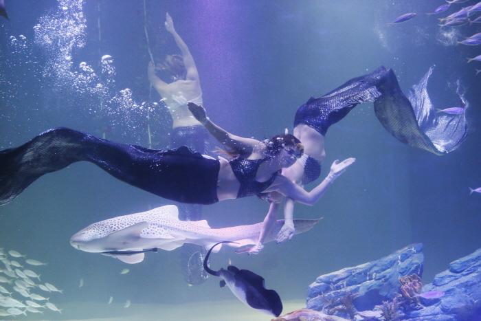 푸른 바다의 인어 공연 모습