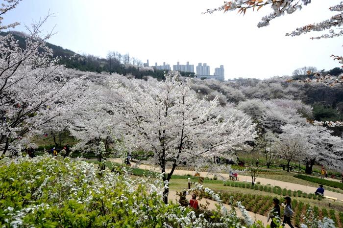 안산자락길 벚꽃음악회 2018  사진3