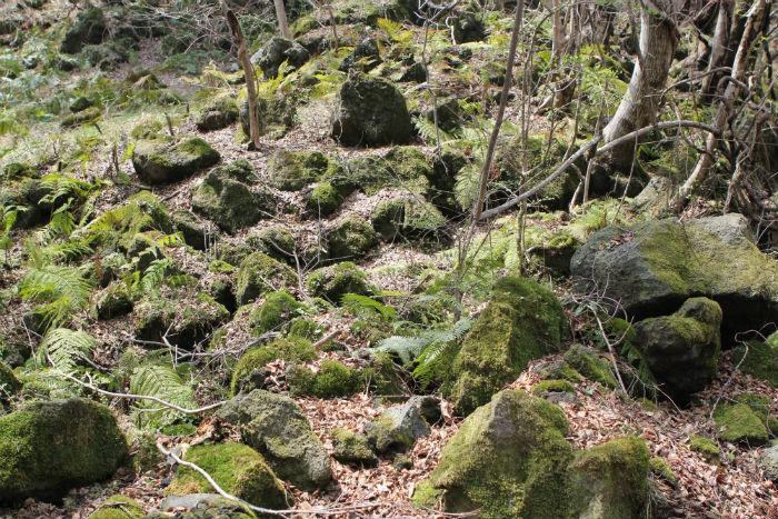 신비스러운 곶자왈의 생태계