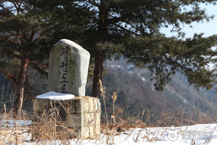 麟蹄院垈里白樺林(인제 원대리 자작나무 숲)17