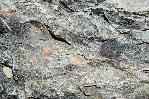진주 유수리 백악기화석 산지