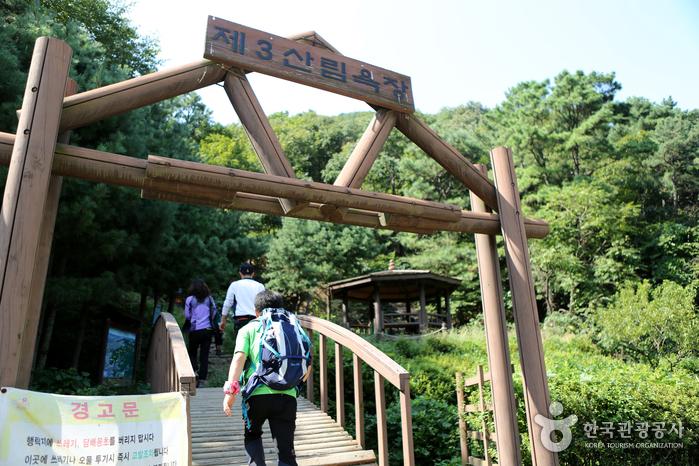 수리산 자락을 즐기는 삼림욕장