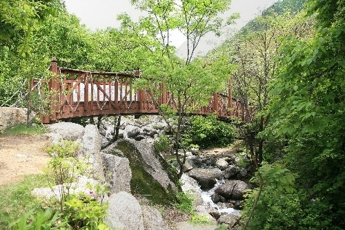 Chungnyeongsan Recreational Forest (축령산자연휴양림)