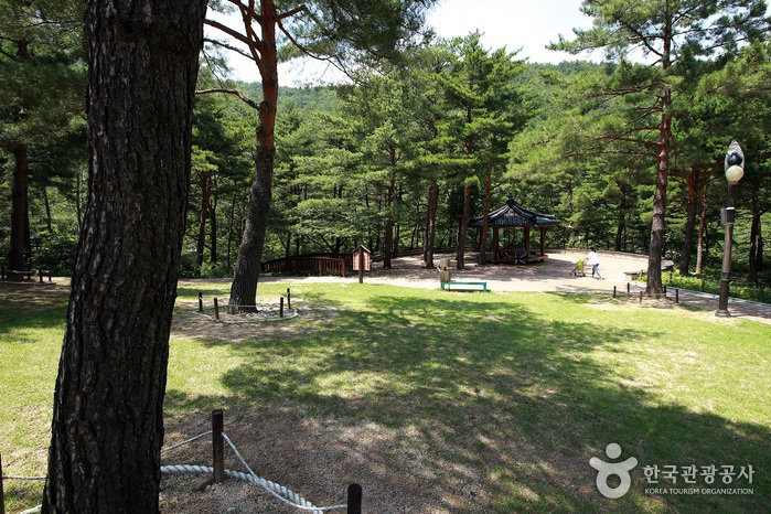아름드리 소나무가 둘러싼 솔숲광장