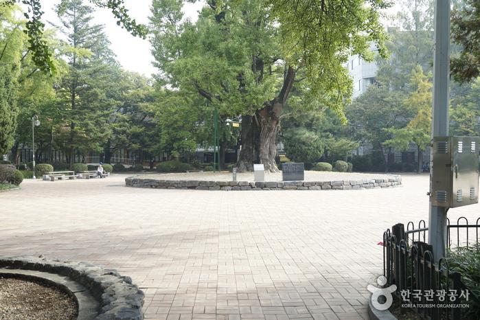 청주 중앙공원