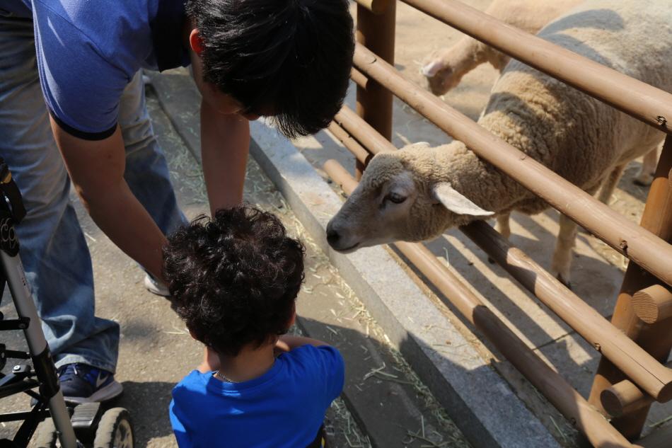 먹이주기 체험 (어린이동물원)
