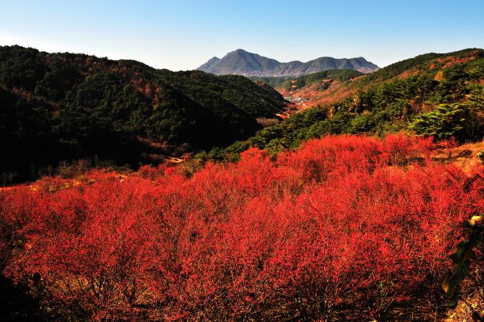 의성산수유마을 꽃맞이행사 2018  사진10