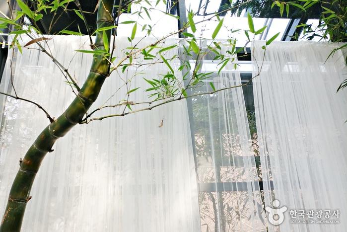 독특하게 휘어 자란 대나무