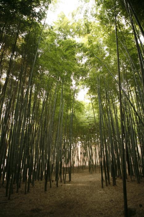 고창읍성 대숲