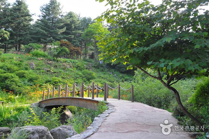 아침고요수목원 사진62