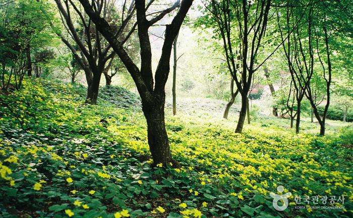 연두색 쉼표 찍기, 청양 고운식물원