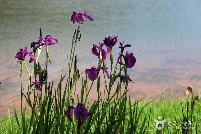 철따라 만나는 꽃들도 정취를 더한다.