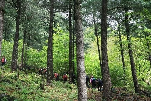 祝靈山自然休養林(축령산자연휴양림)3