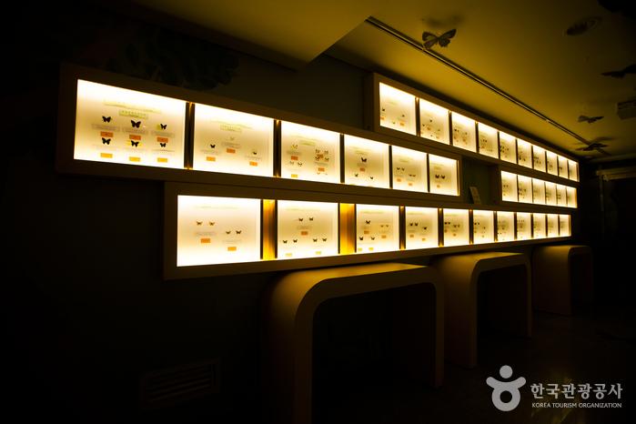 양평곤충박물관