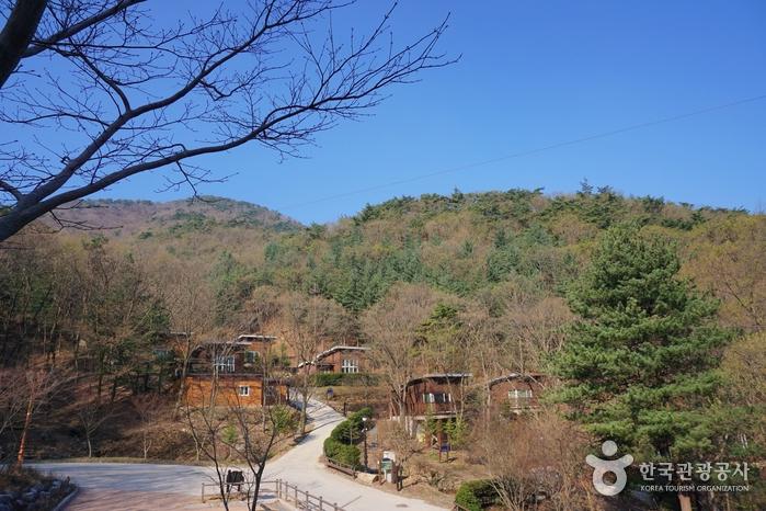 좌구산자연휴양림의 통나무집들