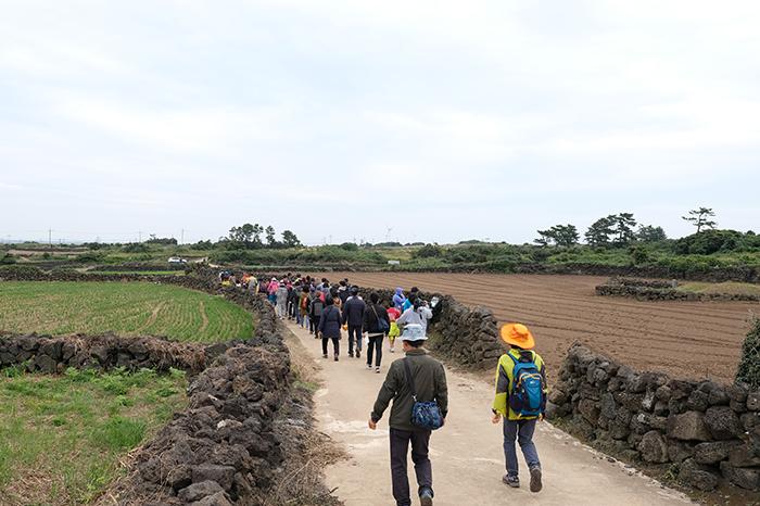 제주밭담축제 2018