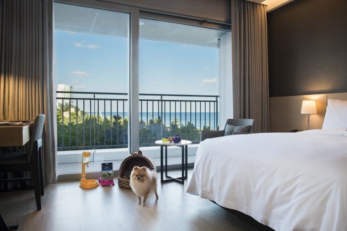세인트존스 호텔_Pet Room3