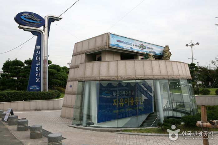 Busan Aquarium (부산아쿠...