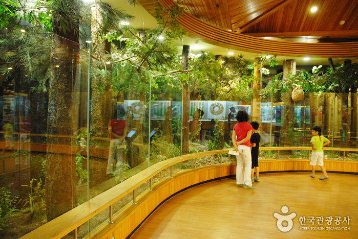 Korea National Arboretum and Forest Museum (국립수목원-구, 광릉수목원)