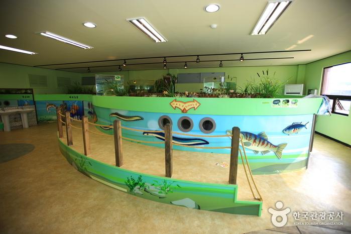 민물고기생태체험관 사진6