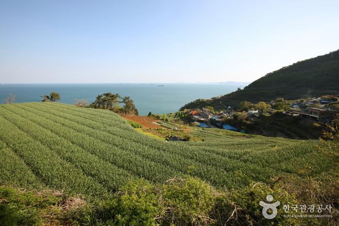 Daraengi-Dorf Gacheon (가천 다랭이마을)