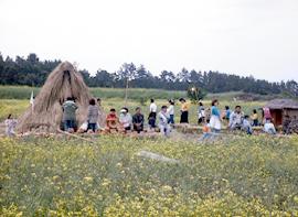 Jeju Canola Flower Festival & Udo Trumpet shell Festival (제주 유채꽃잔치 & 우도 소라축제)