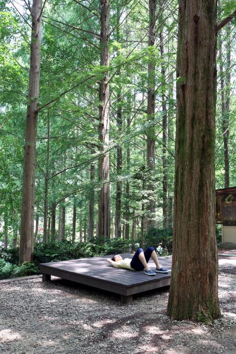 숲 곳곳에 휴식을 취할 수 있는 평상이 놓여있다