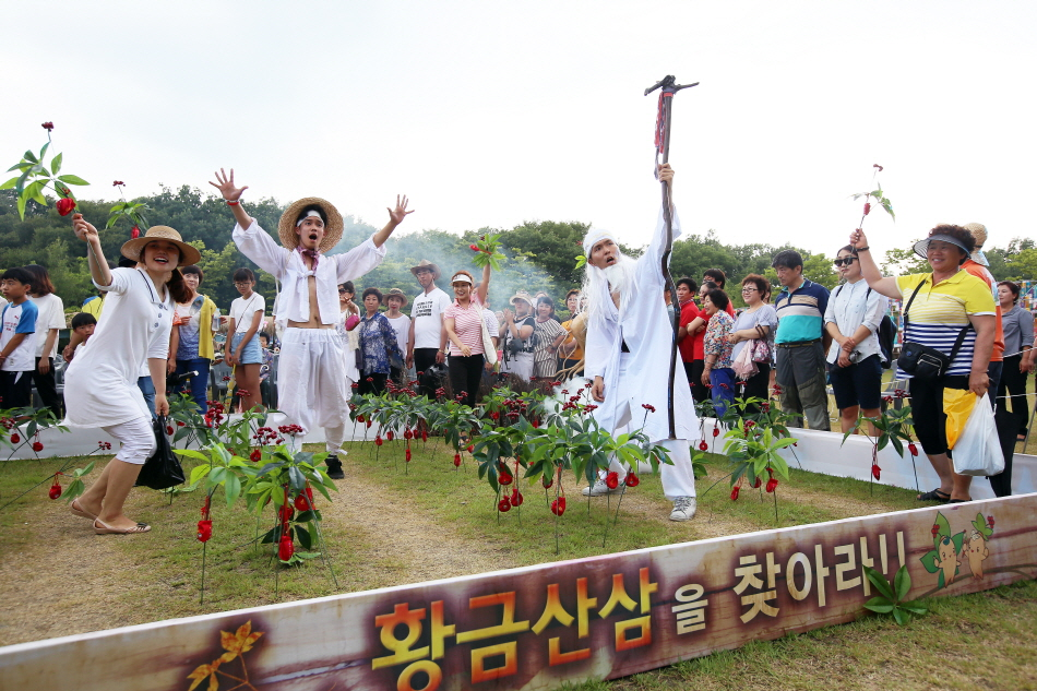축제의 대표 프로그램 '황금산삼을 찾아라'를 즐기는 사람들