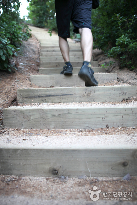 녹음이 우거진 숲길과 계단