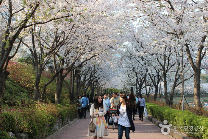 Seokchonhosu Lake Cherry Blossom Festival (석촌호수 벚꽃축제)