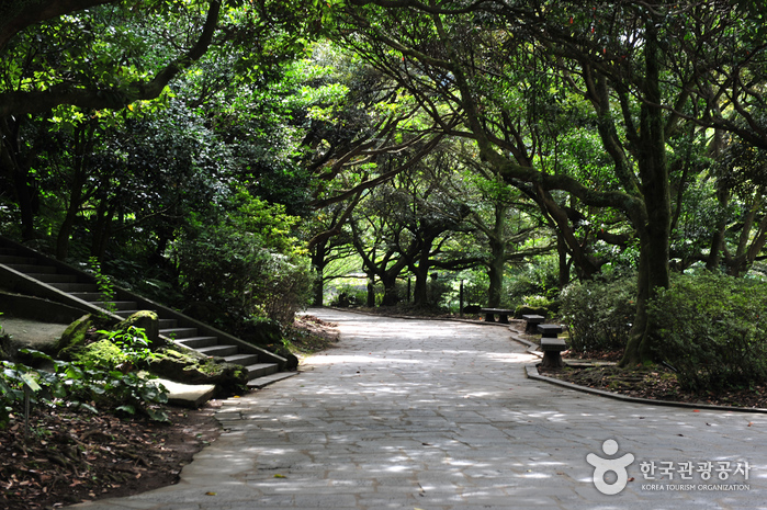 Водопад Чхончжиён (Национальный геопарк Чечжудо) (천지연폭포 (제주도 국가지질공원))12