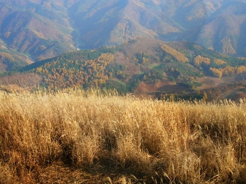 Mindungsan Mountain - Jeungsanchogyo District (민둥산(증산초교지구))