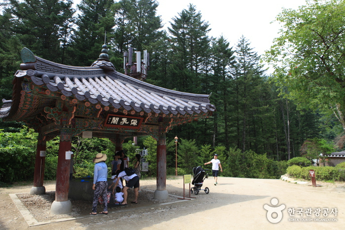Woljeongsa Temple & Fir Tree Forest (월정사·월정사 전나무숲 )
