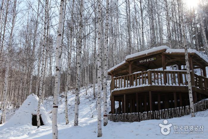 院垈里 白樺の森(ソクサギヌン白樺の森)(원대리 자작나무 숲(속삭이는 자작나무 숲))