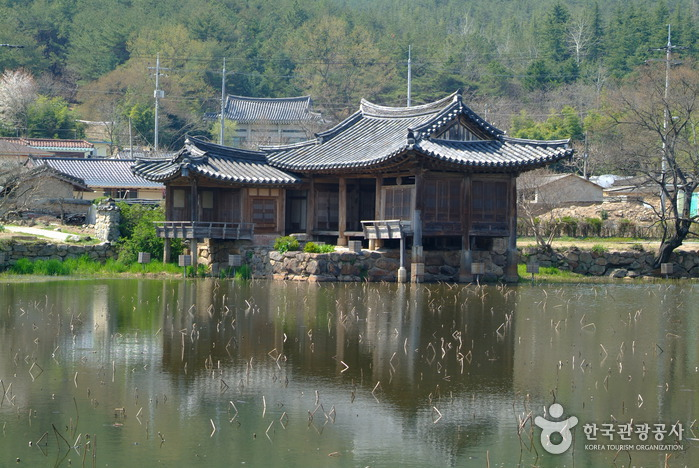Seochulji Pond in Gyeongju (Lotus Flower) (경주 서출지)
