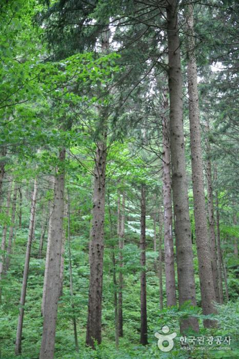 Erholungsbergwald Deogyusan (덕유산자연휴양림)