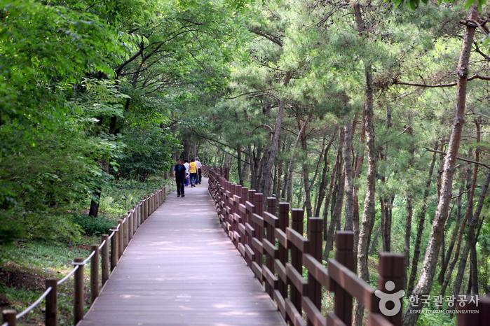 Daegu Arboretum (대