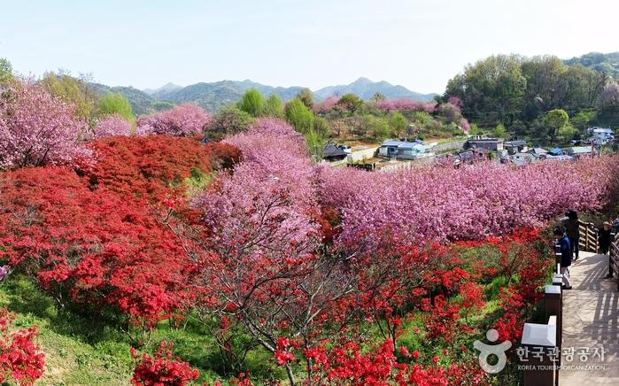 꽃과 예술이 함께 핀 동네 - 전주 완산공원 꽃동산, 서학동 예술마을