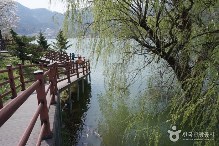 삼기저수지 수양버들에 초록 물이 올랐다.