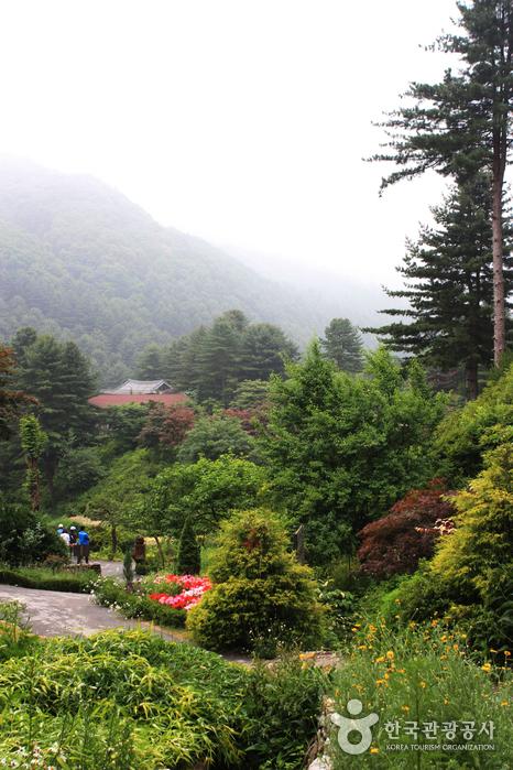 Jardin du matin calme (아침고요수목원)
