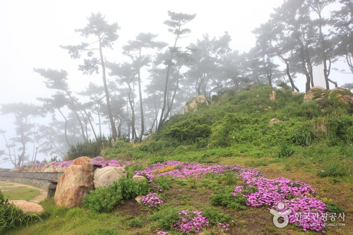 Парк Тэванам (대왕암공원)34