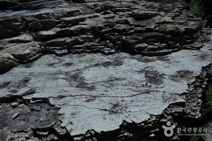 화순 서유리 공룡발자국화석 산지