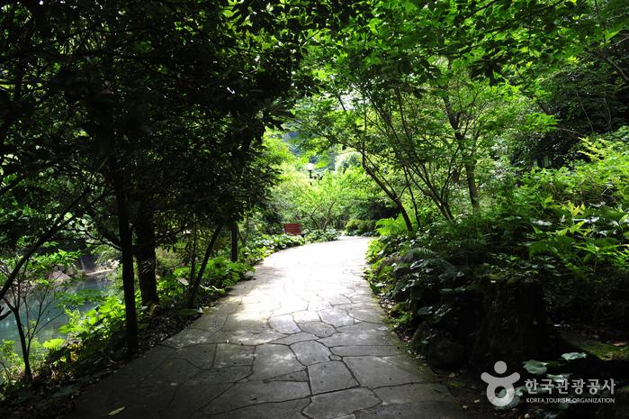 Водопад Чхончжиён (Национальный геопарк Чечжудо) (천지연폭포 (제주도 국가지질공원))11