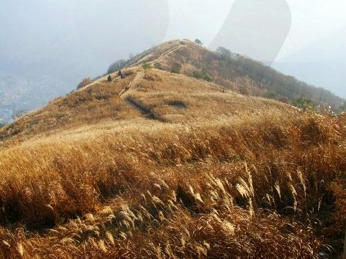 Mindung Mountain Eulalia Festival (민둥산억새꽃축제)