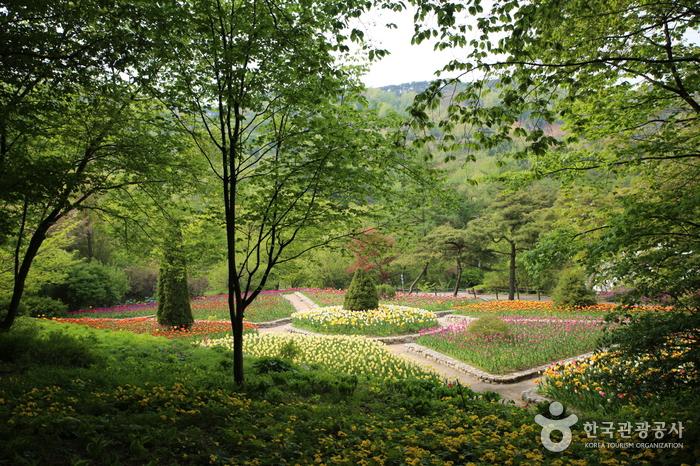 Cheongyang-gun (청양군)