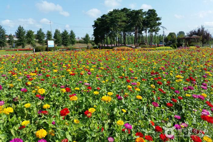 九里市民漢江公園(コスモス公園)(구리시민한강공원(코스모스공원))